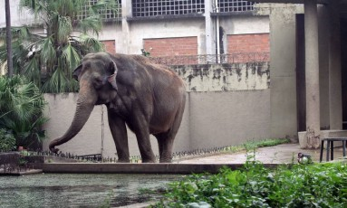 Espaço que abriga elefante está sendo revitalizado por grupo que planeja investir R$ 65 milhões em melhorias nos próximos dois anos Foto: Paulo Nicolella / Agência O Globo