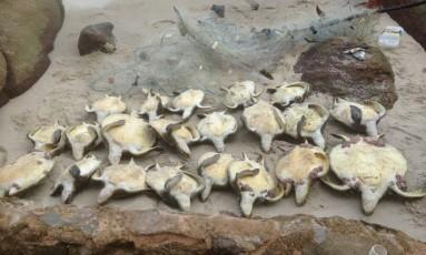 Animais estavam presos numa rede de pesca Foto: Divulgação