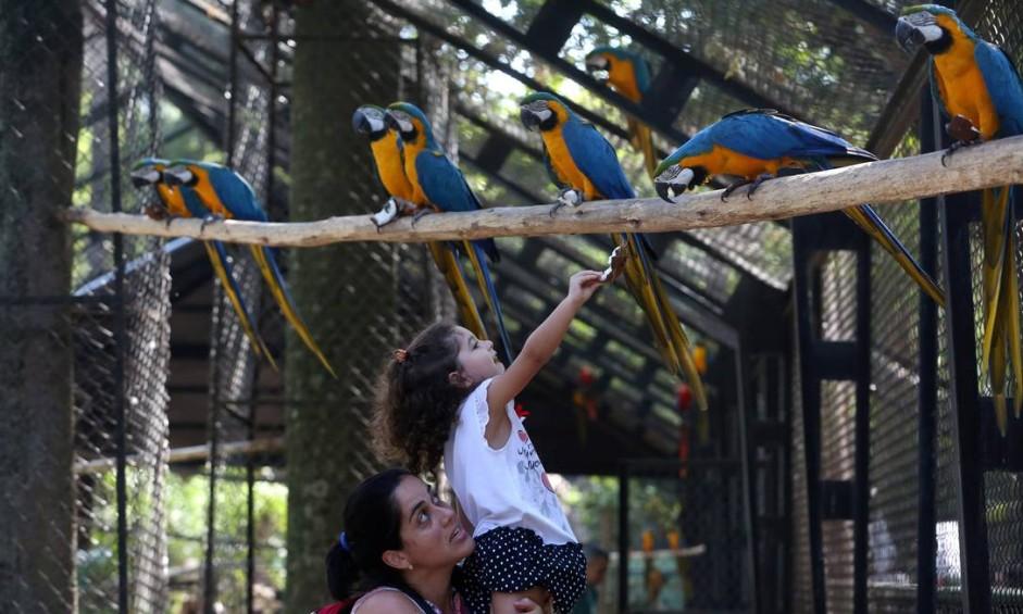Em visitas guiadas, grupos entram no viveiro das aves e podem alimentá-las Foto: Custódio Coimbra / Agência O Globo