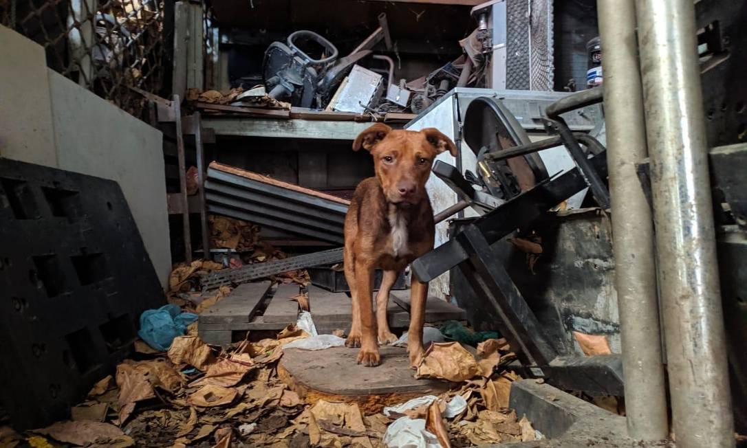 Cães foram resgatados em Padre Miguel Foto: Divulgação