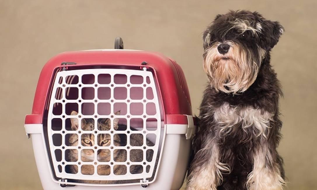 Caixa para transporte de pets Foto: Reprodução