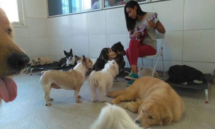 Musicoterapia é um dos tratamentos oferecidos pelo Club Pet, no Leblon Foto: Divulgação