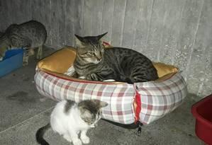 Os gatos não podem mais ficar no subsolo do Pavilhão Japonês Foto: Foto do leitor