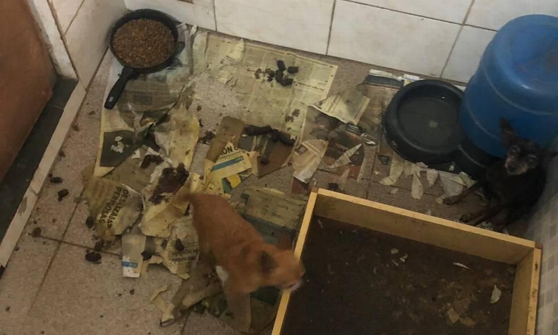 Cachorros foram encotrados em espaços pequenos e sem higiene: vítimas de maus-tratos Foto: Divulgação