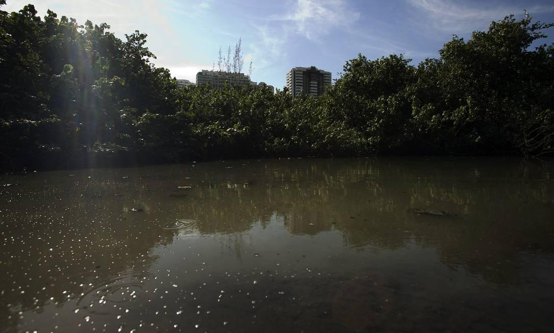 Poluição no Canal de Marapendi Foto: Agência O Globo / Agência O Globo