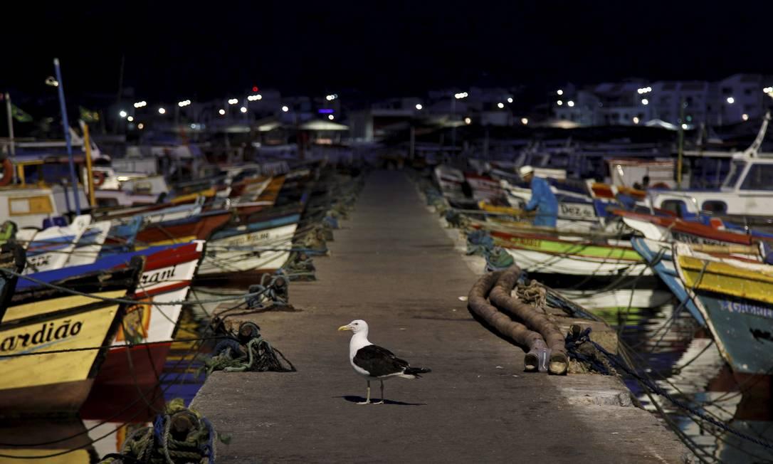 Gaivota à espera do nascer do sol no porto de Arraial do Cabo Pedro Teixeira / Agência O Globo