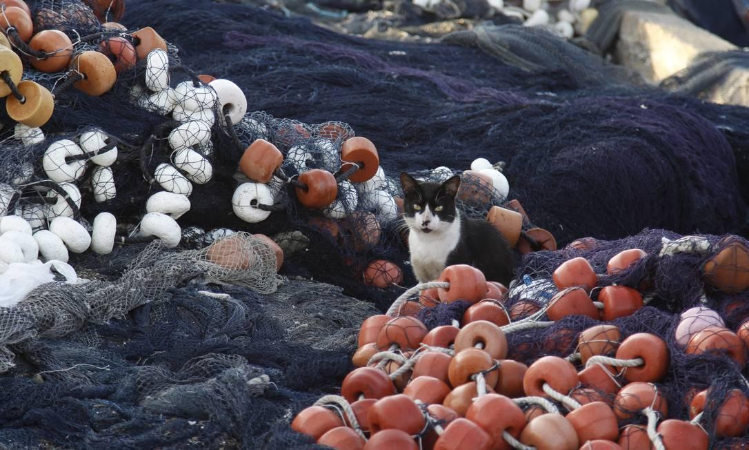 Gato descansa entre as redes de pesca da Praia dos Anjos Pedro Teixeira / Agência O Globo