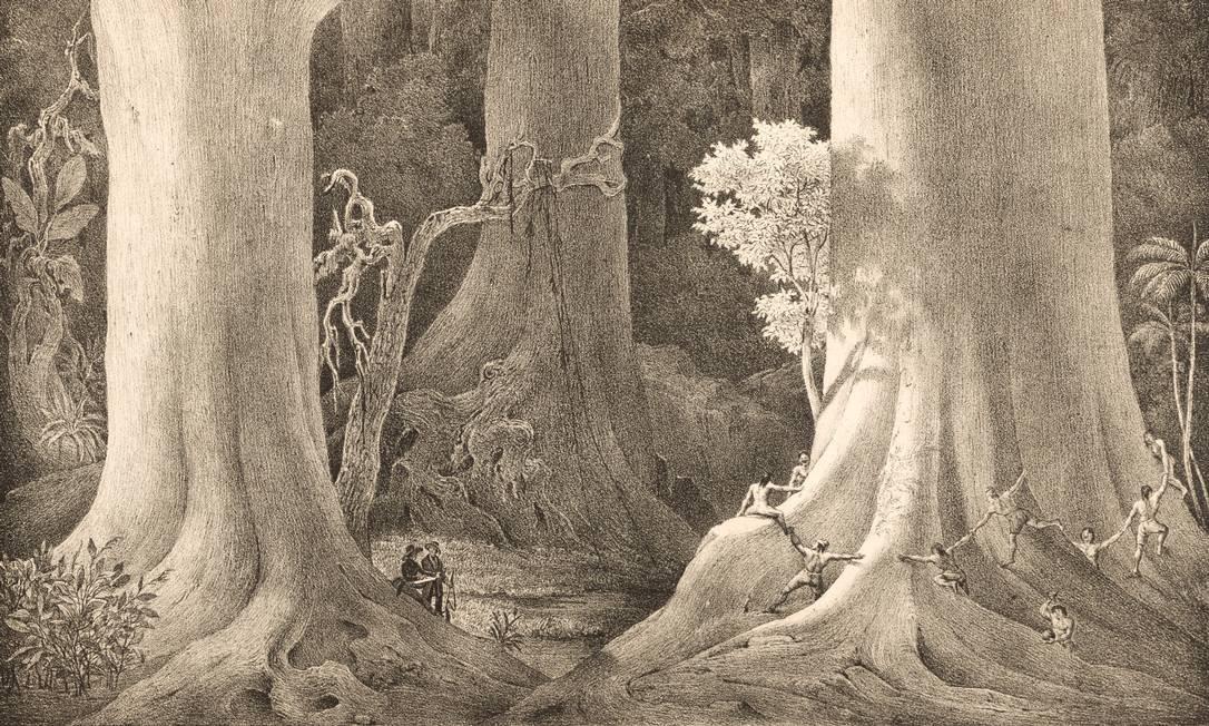 A mostra 'Natureza, ciência e arte na viagem pelo Brasil de Spix e Martius – 1817-1820' que celebra os 200 anos da expedição dos naturalistas, está em cartaz no Museu do Ambiente, no Jardim Botânico Foto: Divulgação/Cicero Rodrigues