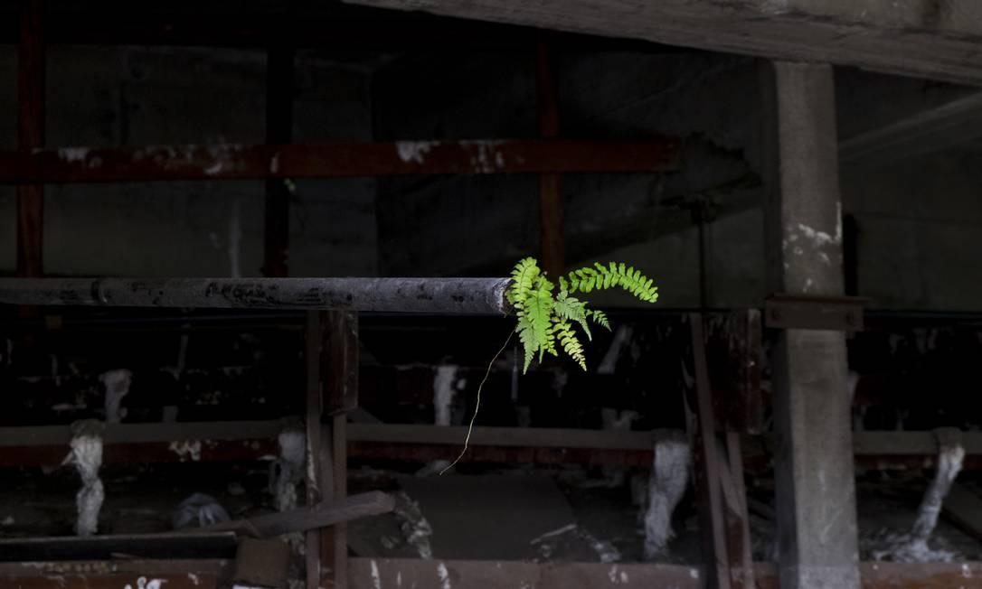 Os registros foram feitos em localidades da Amazônia como a Reserva Adolpho Ducke do INPA (Instituto Nacional de Pesquisas Amazônicas), o Parque Nacional de Anavilhanas e a cidade de Presidente Figueiredo. Foto: Divulgação