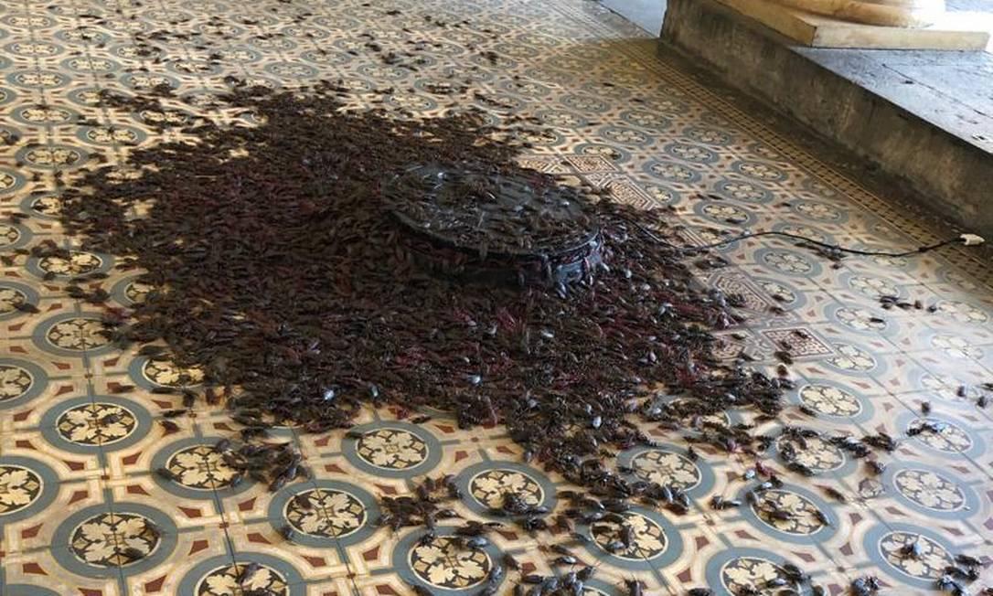 Obra 'A voz do ralo é a voz de Deus', instalação composta por 6 mil baratas de plástico em volta da tampa de um bueiro Foto: Divulgação
