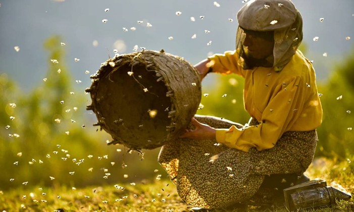 Honeyland, filme da Macedônia do Norte que concorreu ao Oscar de Filme Interacional e de Documentário. Foto: Divulgação