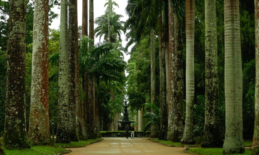 Chafariz das Musas, no Jardim Botânico do Rio de Janeiro Foto: Roberto Moreyra / Agência O Globo