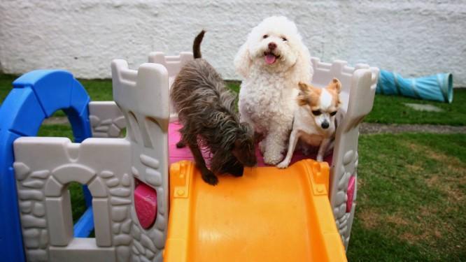 Hospedagem para cachorro do Hotel Pet Family, no Recreio Foto: Márcio Alves / Agência O GLOBO