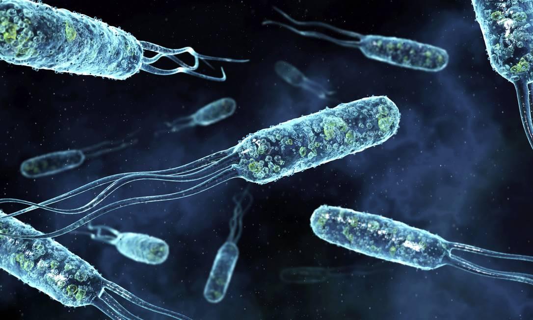 Bactérias evoluem e se tornam resistentes a medicamentos Foto: / DAVID MACK